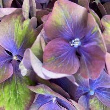 Fleurs séchées ou fleurs fraîches pourquoi choisir ?